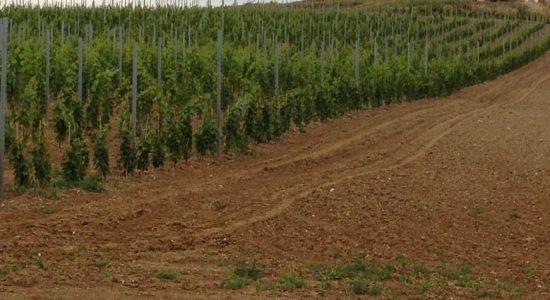 Nový vinohrad